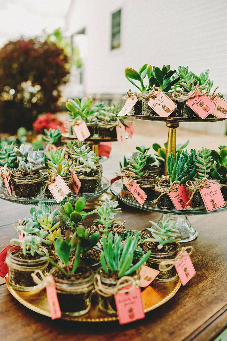 Plant and Herb Wedding Favors - Wedding Philippines ...