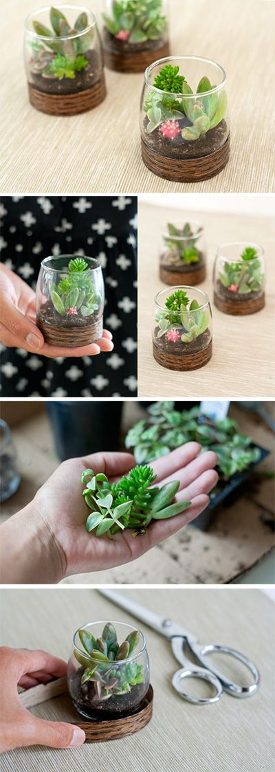 Plant And Herb Wedding Favors